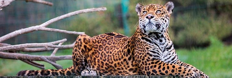 Parque de animales Sendaviva