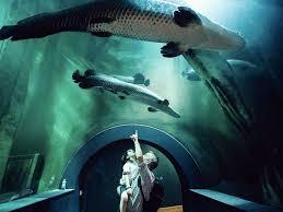 como llegar acuario de zaragoza