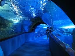 como llegar acuario de san sebastián