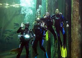 actividades acuario de zaragoza