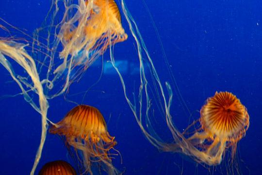 Acuario de Sevilla medusas